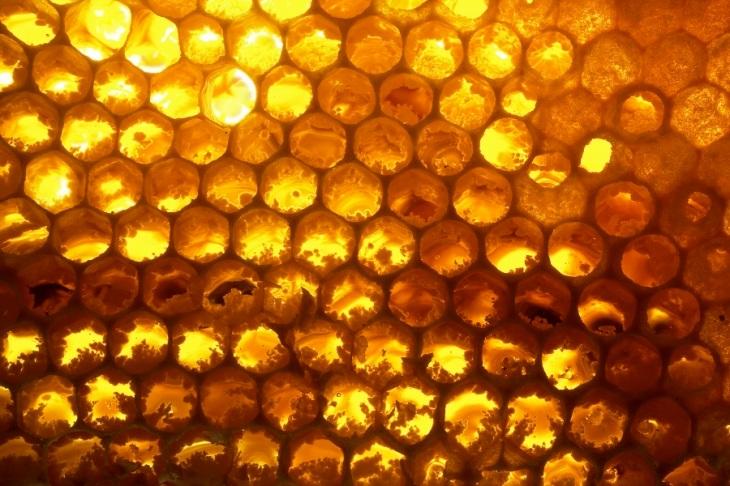 Resized_honeycomb